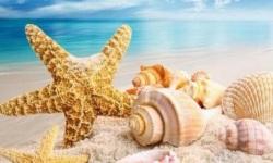 Món quà từ tay mẹ: Những con ốc biển